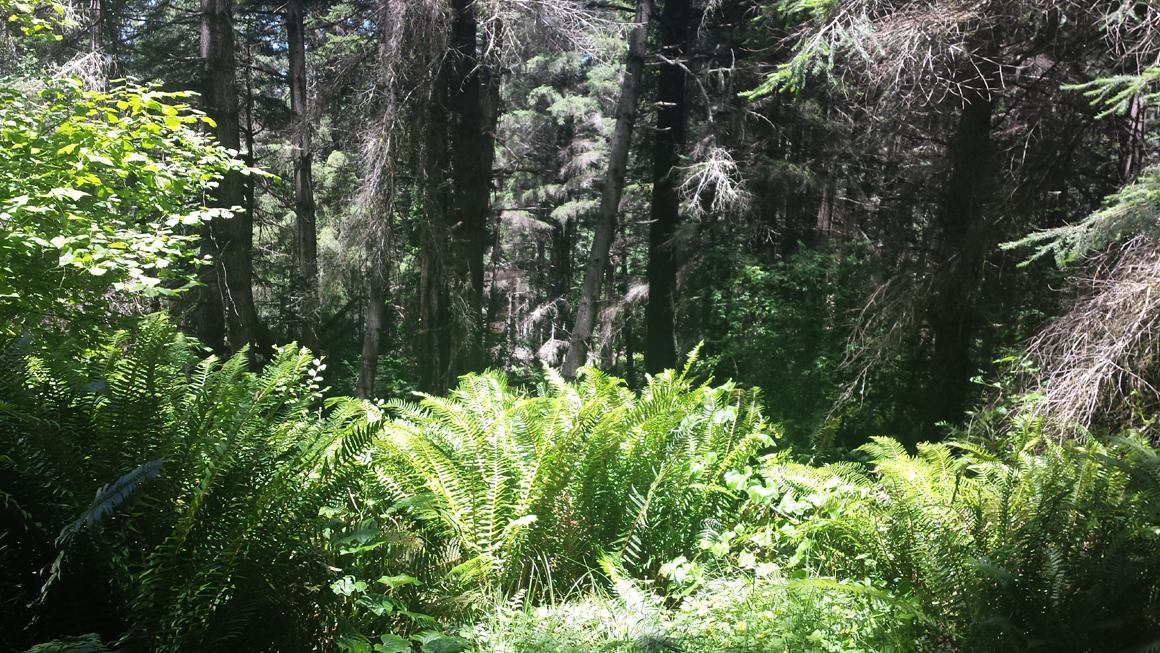 Forest and ferns
