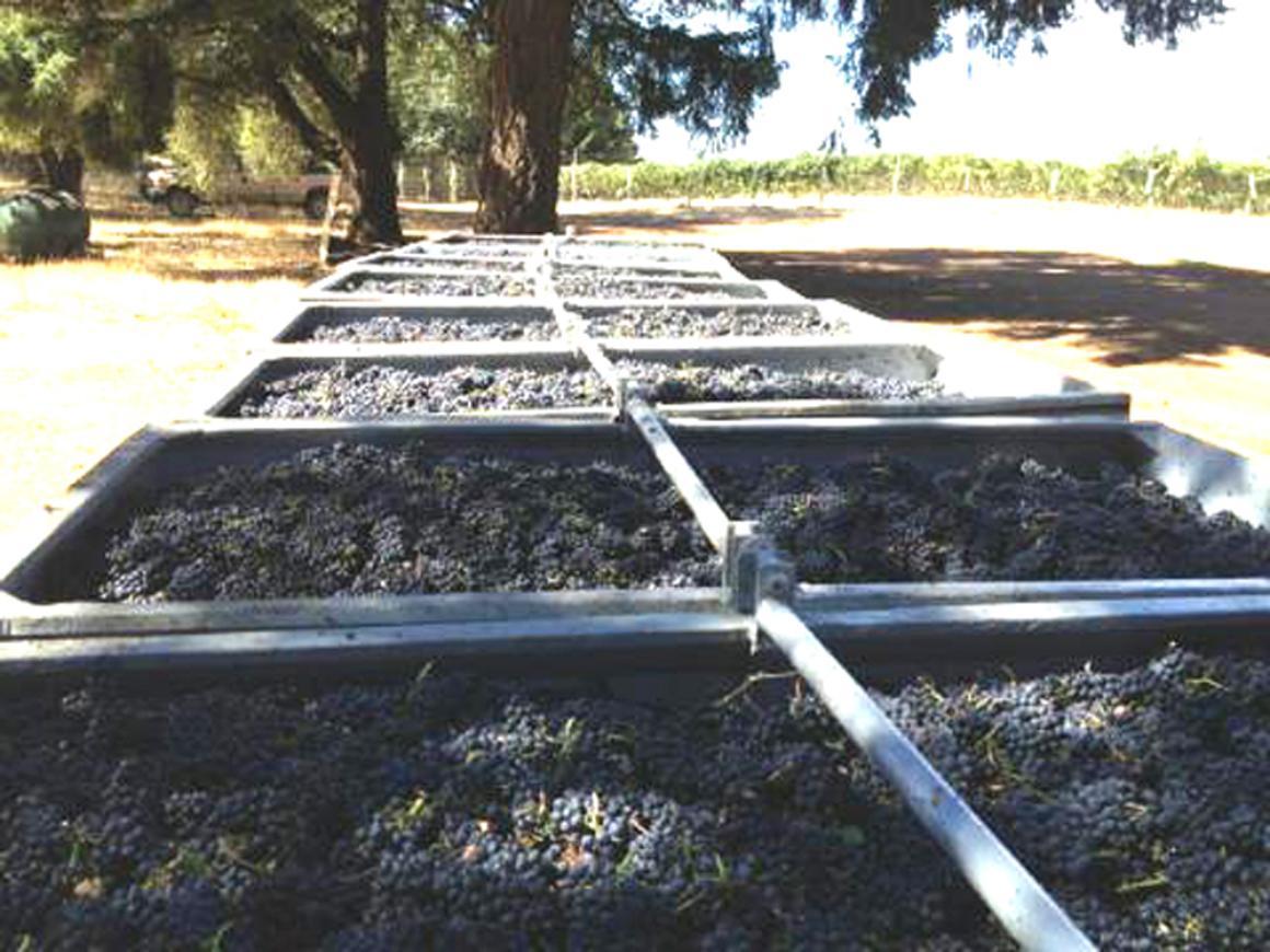 Grape gondolas