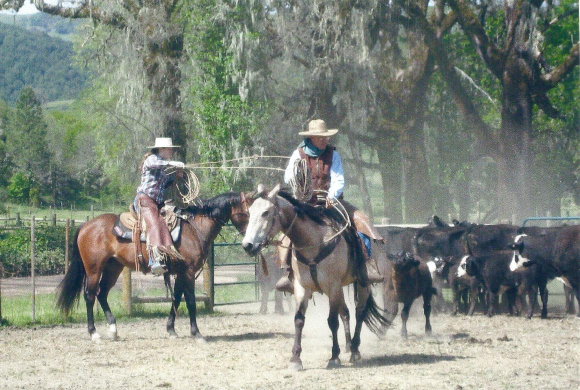 Cowboys on horseback rounding up some cattle