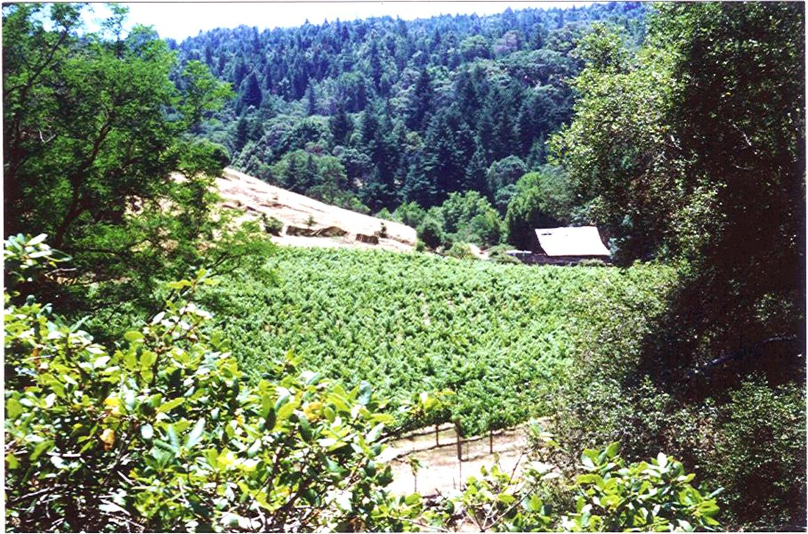 A photo of the former vineyard