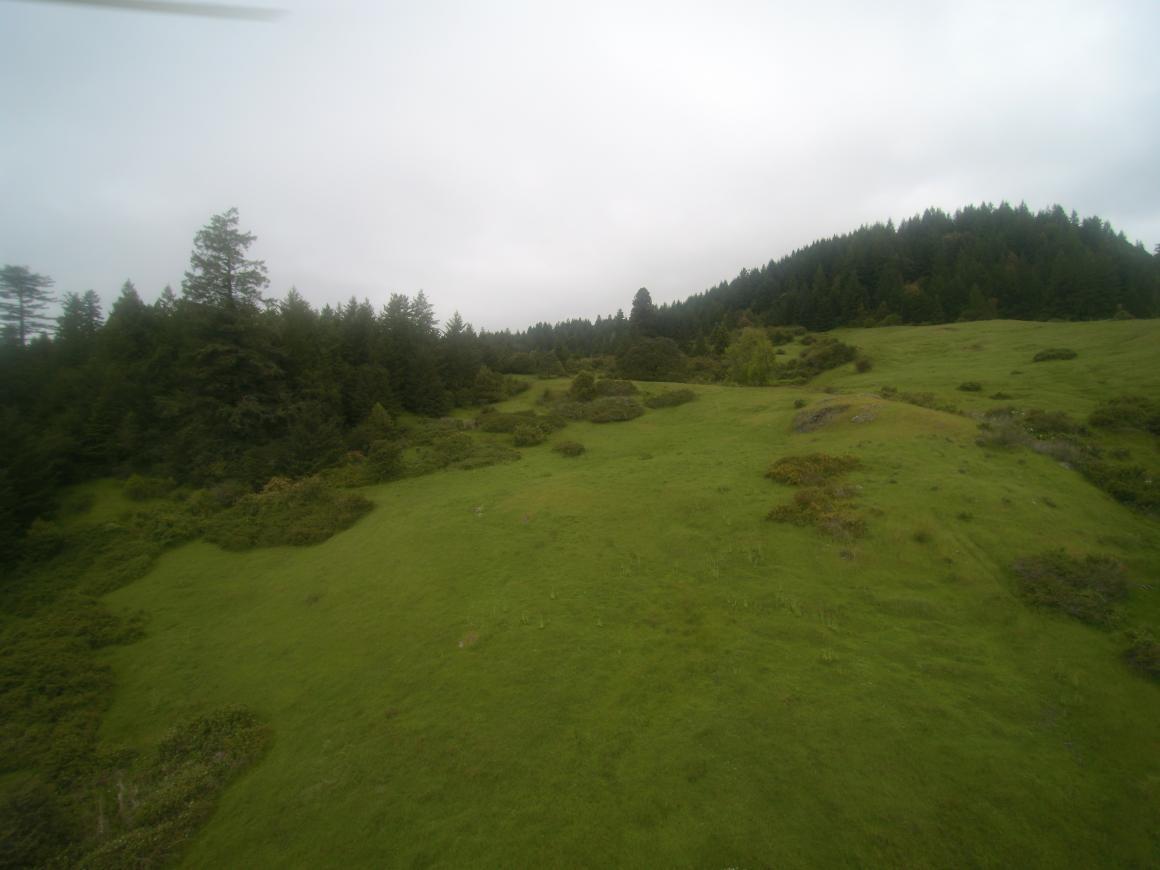 aerial of grassland