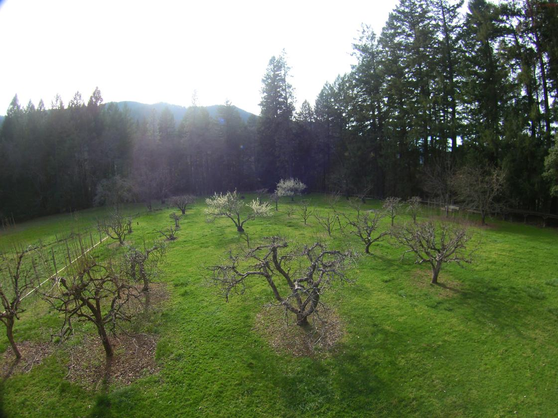 Bountiful orchard