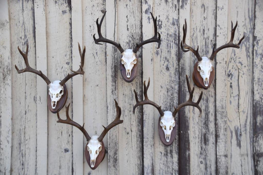 Antlers on the barn
