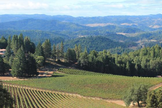 Panoramic view showing the main home & part of the vineyards