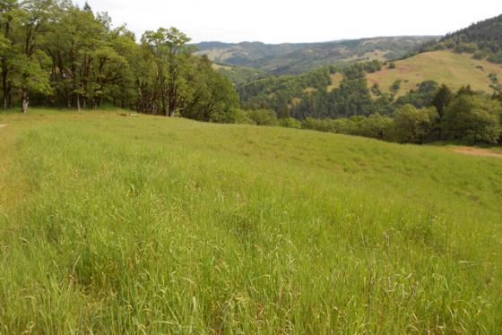 Beautiful recreational land